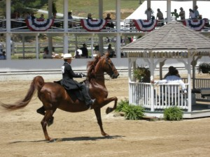 Horse Show Blowing Rock, NC PHOTO SMALL 6-08 008