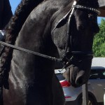Blowing Rock Annual Charity Horse Show